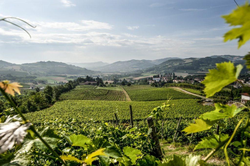 Alta Langa hills