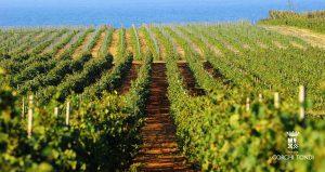 Gorghi Tondi vineyard