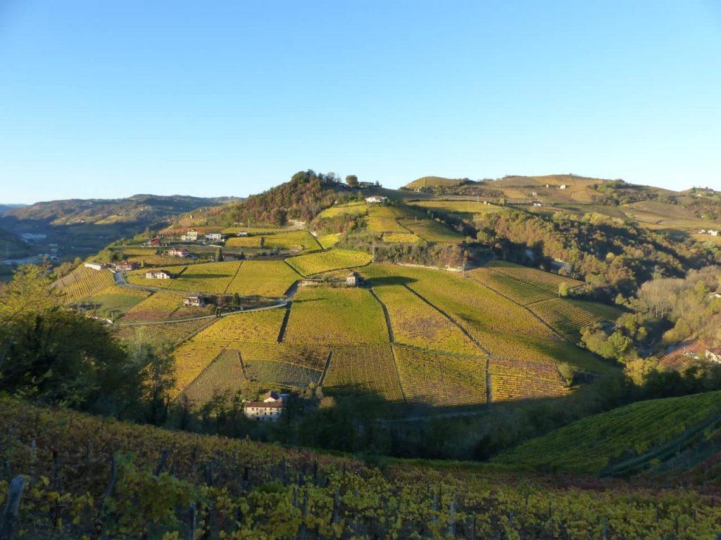 Moscato Bianco vineyards in Santo Stefano Belbo