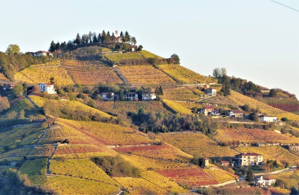 the autumn dress of a Moscato vineyard