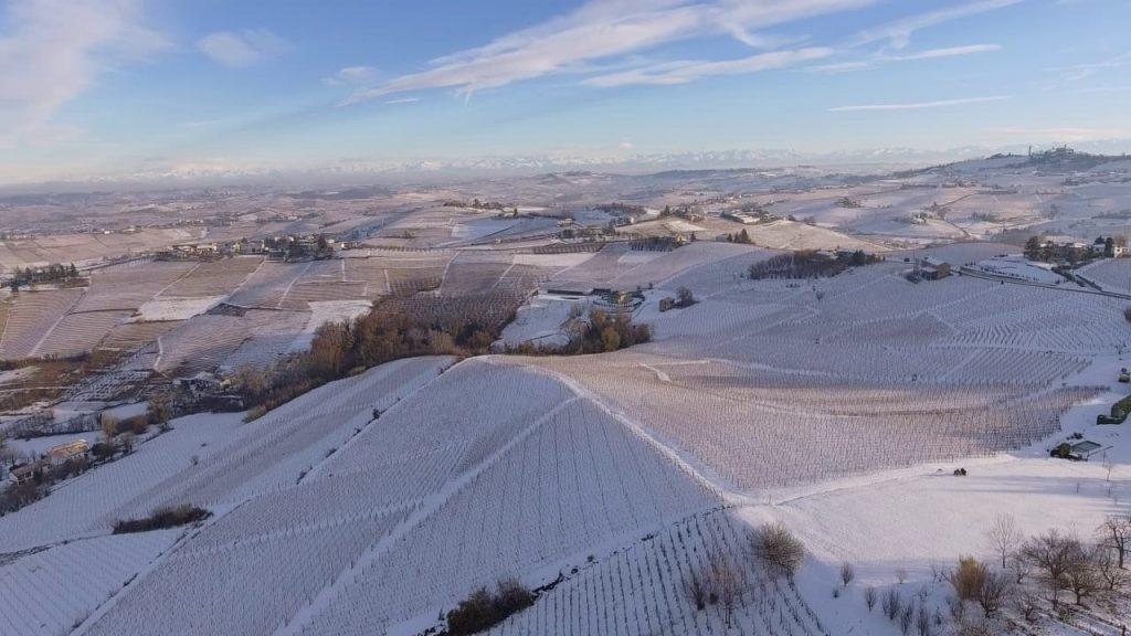 Moscato's vineyards during winter