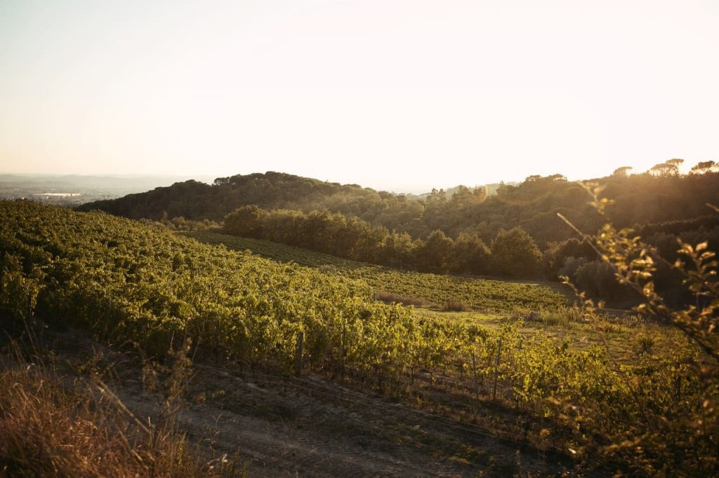 vineyards in Montalbano