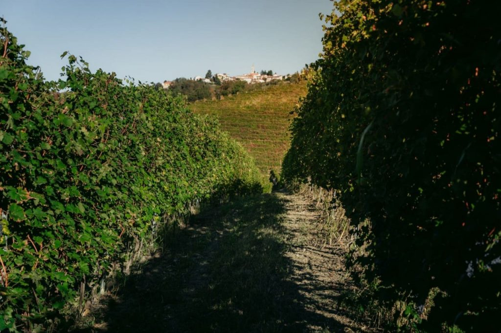 Pianfiorito vineyard in Albugnano