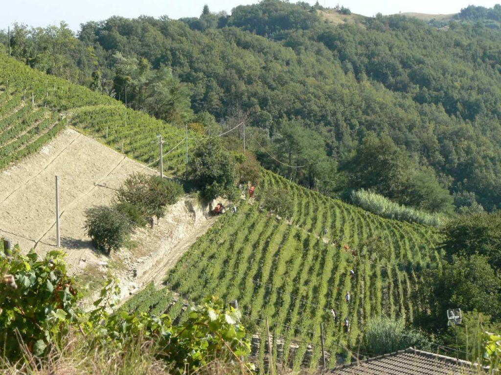 vineyards in Loazzolo